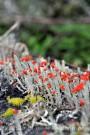 orange fungus 3