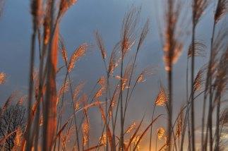 grassesalight
